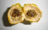 Uma fruta silvestre revela ação promissora para controlar tremores do mal de Parkinson