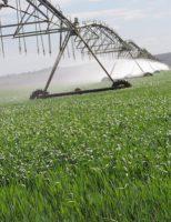 Nordeste está se tornando a mais nova opção para os plantios de trigo no Brasil