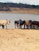 A criação de bovinos de corte e de leite é mais rentável com melhor utilização de água