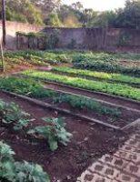 Controle biológico pode livrar as hortaliças do ataque de pragas