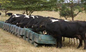 Um cardápio variado para oferecer ao gado no período de seca no semiárido