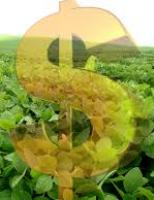 Cresce o Valor da produção agropecuária de 2020 em relação a 2019