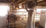 Climatizadores ajudam a melhorar o desempenho produtivo e o bem-estar dos animais