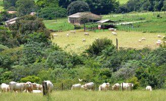 Estudo mostra como as fazendas podem neutralizar as emissões de gases de efeito estufa