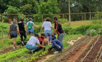 Pequenos espaços urbanos podem ser transformados em fazendas verticais para cultivo de hortaliças