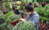 Interessados já podem se inscrever para o curso de gestão do agronegócio oferecido pelo  Senar-PE e Faculdade CNA