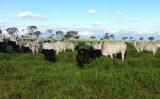 Suplementar alimentação do gado é importante até durante o período de muita pastagens