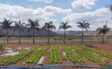 A reutilização de água para irrigar hortaliças passando por uma nova Estação de tratamento de esgoto