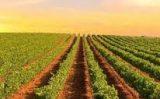O Brasil é líder no consumo dos vinhos da região portuguesa do Alentejo