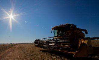 Aumenta a produção brasileira de grãos