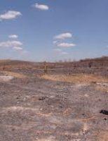 O jeito correto de preservar as pastagens evitando o uso do fogo