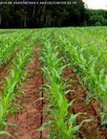 Pequenas propriedades podem aumentar o rendimento do plantio de milho
