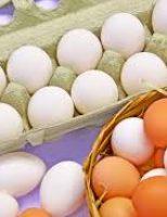 Aumenta a exportação de ovos produzidos no Brasil