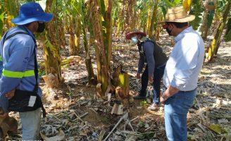 Plano de ação promove crescimento na cadeia produtiva do agronegócio nordestino