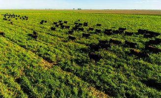 """Tecnologia do """"Boi safrinha"""" ajuda os produtores a manter a rentabilidade do rebanho"""