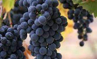 Consumidor brasileiro está tomando mais vinho de uva malbec