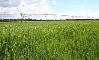 Produtores ganham orientações para o plantio de arroz de sequeiro e irrigado safra 2021/2022