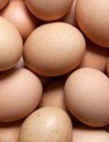 Recomendações para o agricultor produzir ovos caipiras