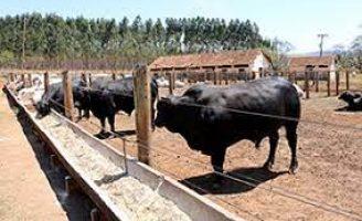 Suplementação ajuda a reduzir perdas do pecuarista durante a estação seca