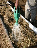 Preparando a ração do gado com uso de ureia e cana de açúcar