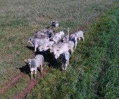 A pecuária no Semiárido pode ter mais produtividade com o bom uso da forragem