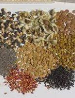 A importância de uso de sementes florestais nativas para fortalecimento da Caatinga