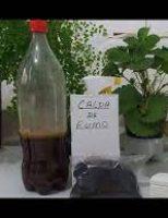 Uso de caldas naturais para combater pragas e doenças nas hortaliças