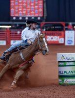 A importância de cuidar bem dos cavalos atletas