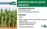Nova tecnologia destaca consórcio cana-de-açúcar com milho
