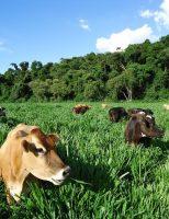 A pecuária brasileira pode se adaptar ao sistema de produção orgânica